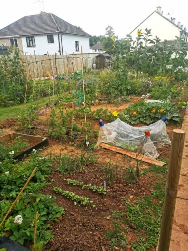 Our allotment started in February - Hannah Thackeray
